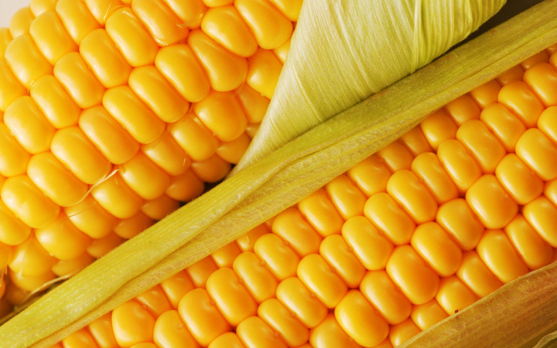 chanceller-comercio-exterior-agro-agribusiness-milho-corn