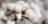 chanceller-comercio-exterior-agro-agribusiness-algodao-cotton-importacao-exportacao (19)