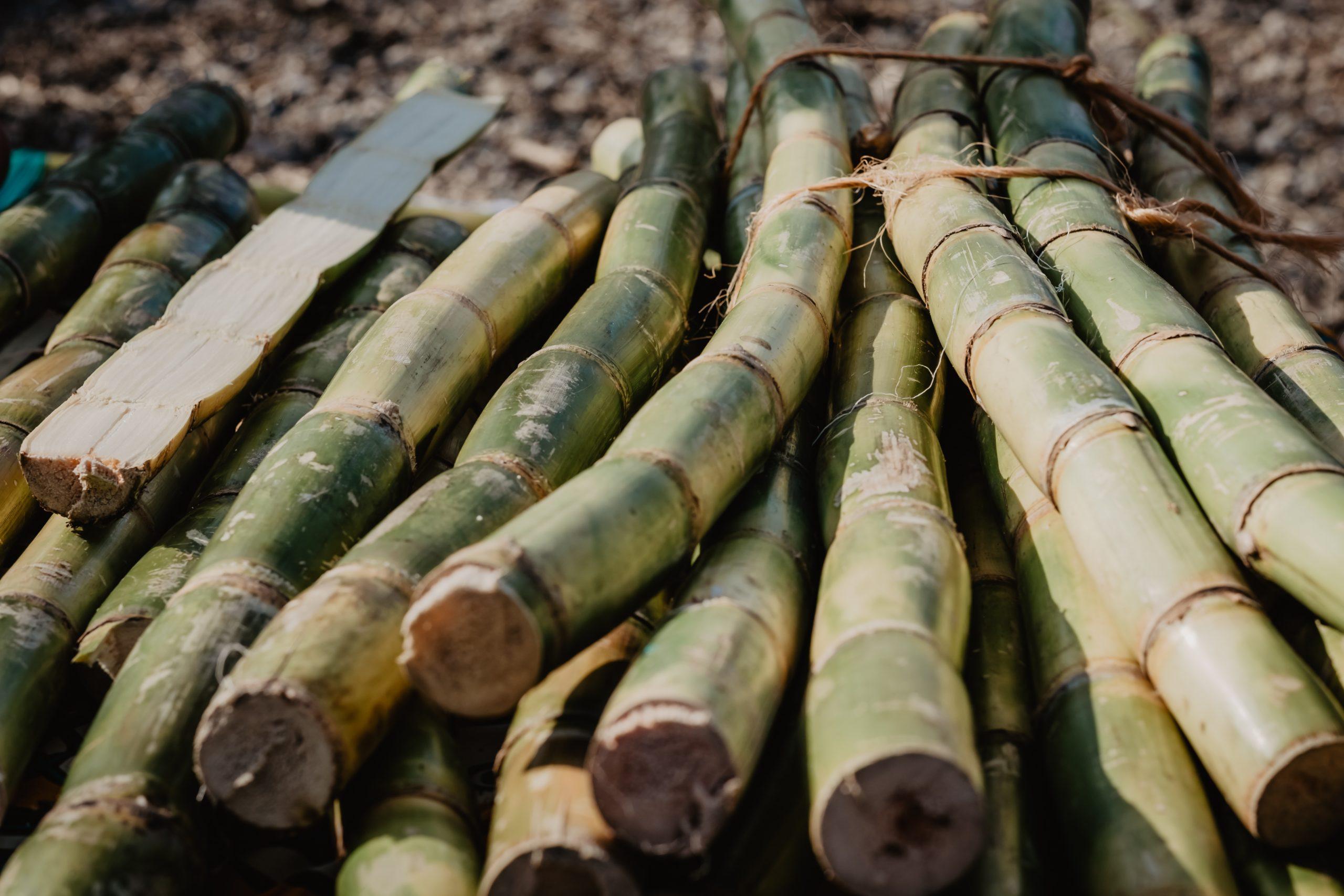sugar-açúcar-importação-exportação-comércio-exterior-agronegocio-brasileiro-agribusiness.jpg